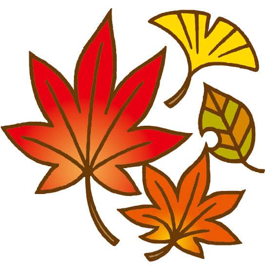 秋こそ脱毛しよう